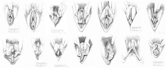 The Range Of Vulva Styles From Sex For One  Betty Dodson -4777