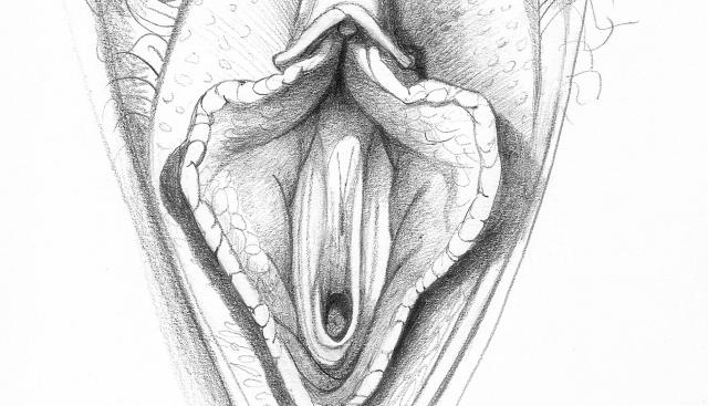 Could Large Labia Be The Cause Of Utis